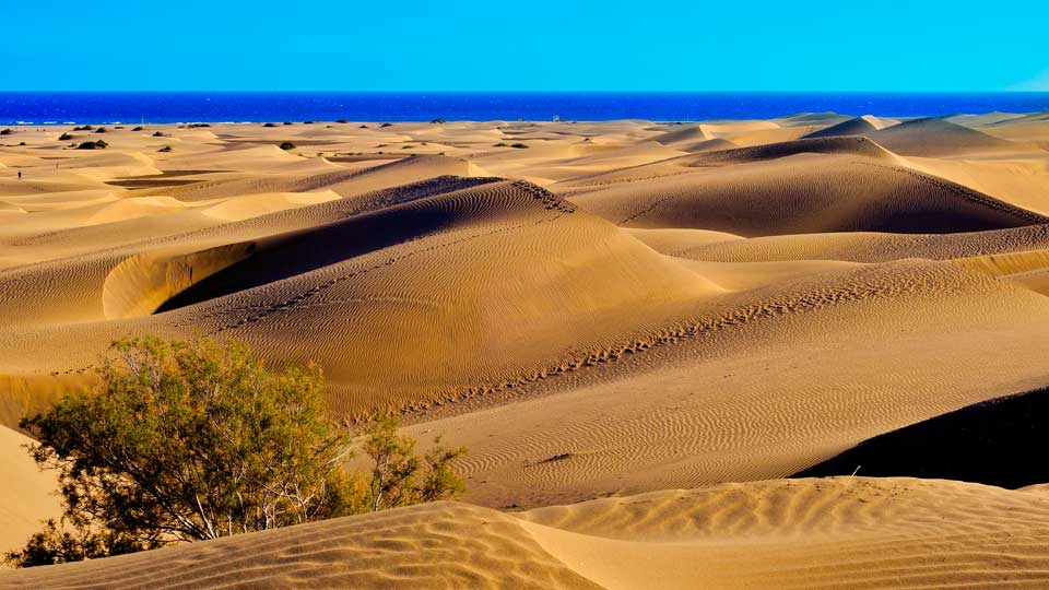 Natural Reserve of Maspalomas Dunes