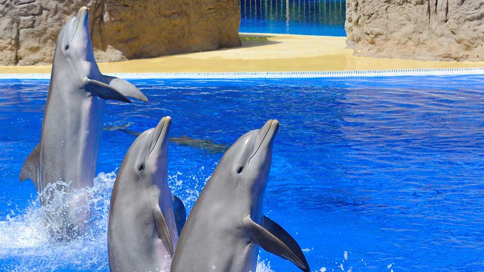 Dolphins in Palmitos Park