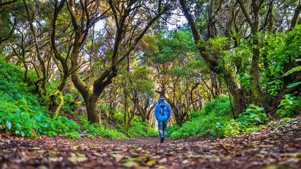Hiking El Hierro