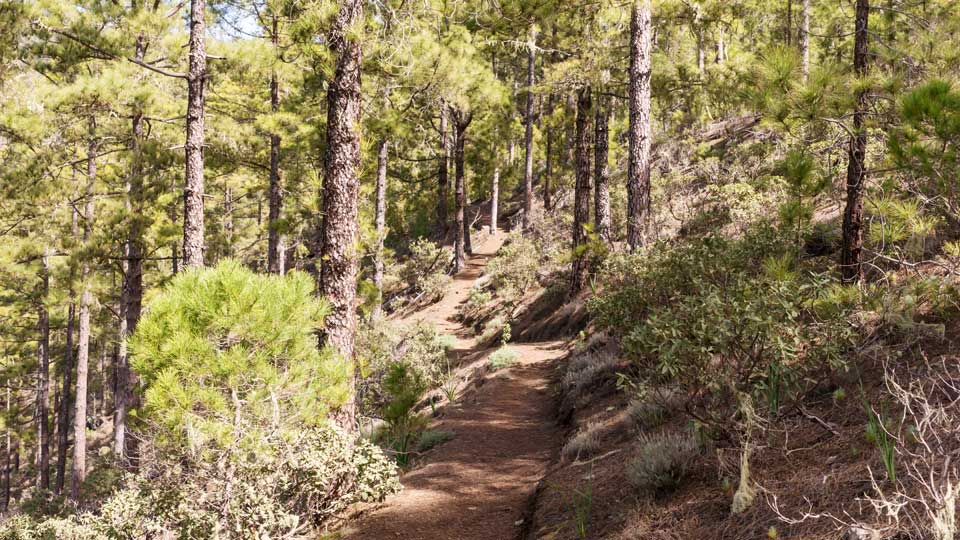 Hiking Tamadaba National Park Gran Canaria