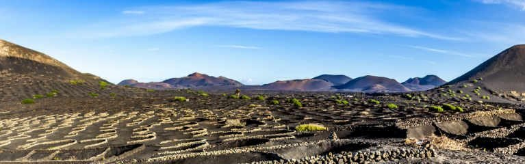 Vineyards on Wine Route of Lanzarote