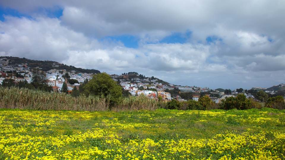 A Field of Yellow Flowers Near the Town Center